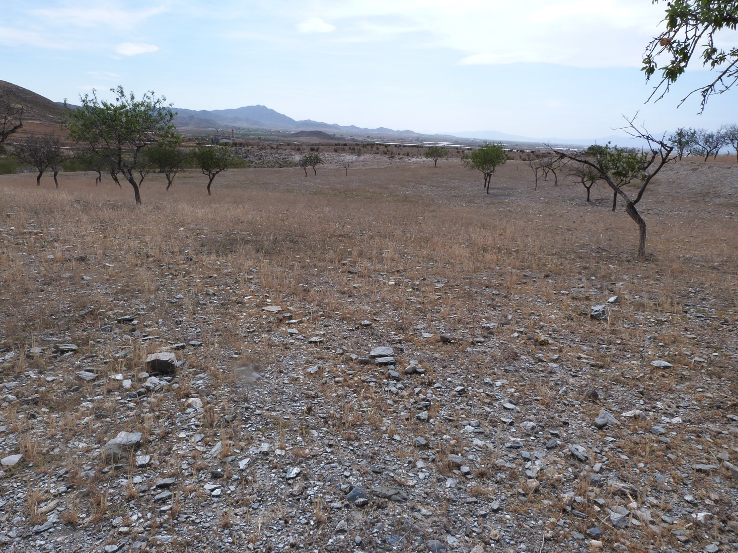 LARGE FLAT PLOT IN LOS PEREZ WITH GOOD ROAD NETWORK LINKS